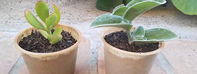 IMG-PlantPotato